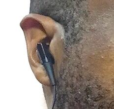 Fred ATH ear detail