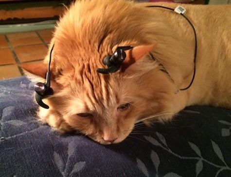 cat negri earphones 1
